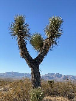 Joshua Tree, Desert, Mojave, Off-roading, California