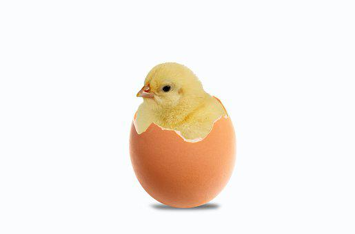 Chick, Egg, Easter, Public Holidays, Spring, Newborn
