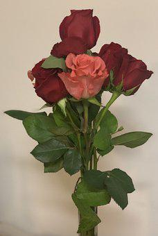 Roses, Flowers, Red And Pink, Valentine's Day