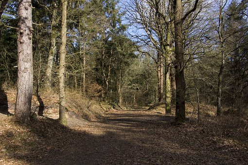 Trees, Lake, Forest, Glade, Forests, Trail, Path
