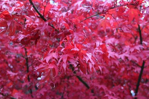 Leaves, Red, Rain, Fall, Autumn