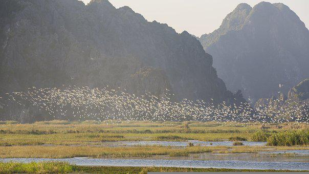 Herd Of Storks, Floating Lagoon, Limestone Mountains