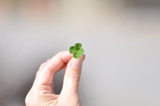 Shamrock, Lucky, Green, Clover, Luck, Shamrocks, Plant