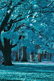 Trees, Blue, Landscape, Field, Nature, Tree, Magic