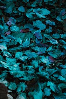 Leaves, Background, Nature, Fall, Foliage, Colorful