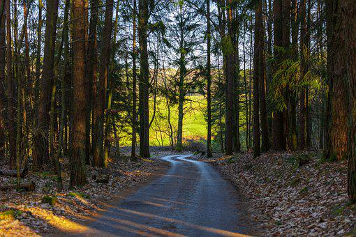 Forest Path, Away, Road, Forest, Nature, Trees