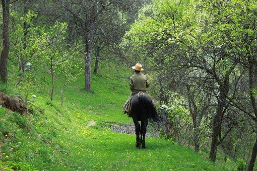 Romania, Nature, Transylvania, Mountain, Outdoor