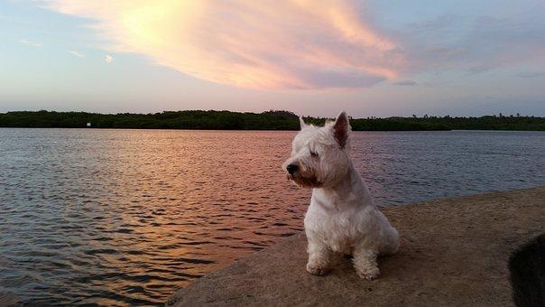 My Dog, Peace, Paz, River, Landscape, Ambiente