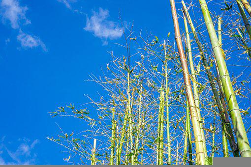Bamboo, Sky, Nature, Plants, Forest, Asia