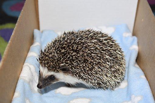 Hedgehog, Jessica, Project