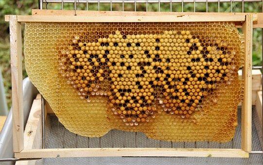 Bees, Beehive, Honey, Honeycomb, Honey Combs, Queen Bee