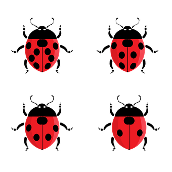 Ladybug, Bug, Insect, Beetle, Nature, Animal, Red