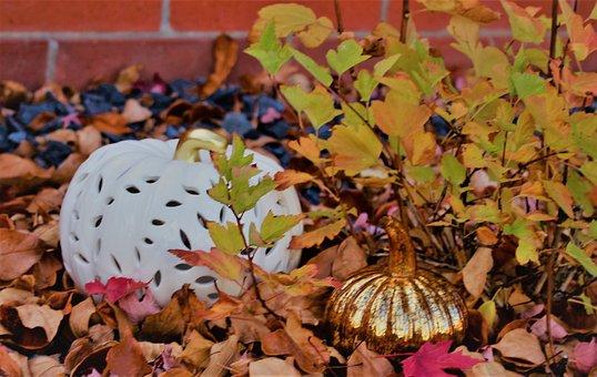 Fall, Autumn, Nature, Foliage, Leaves, Season, Colorful