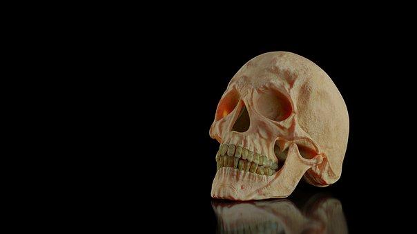 Skull, Head, Skeleton, Death, Dead, Human, Zombie, Face