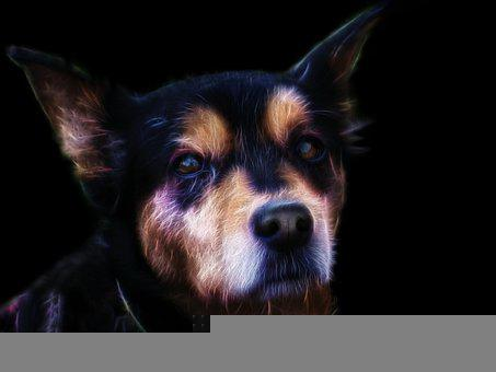 Dog, Mixed Breed Dog, Pet, Snout, Animal, Portrait
