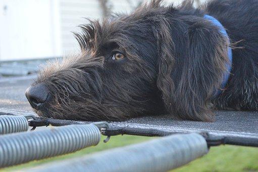 Dog, Black, Frost, Tramp