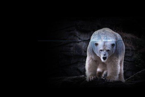 Ice Bear, Iceberg, Wildlife, Animal, Climate Warming