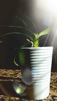 Plant, Green, White, Background, Iris, Foliage, Flower