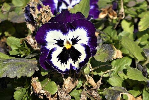 Flower, Petals, Bicolored, Bloom, Blossom, Flora