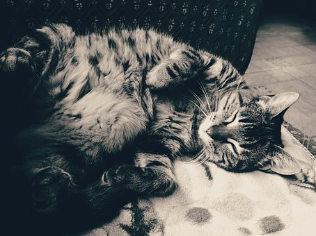 Cat, Black And Withe, Sleep