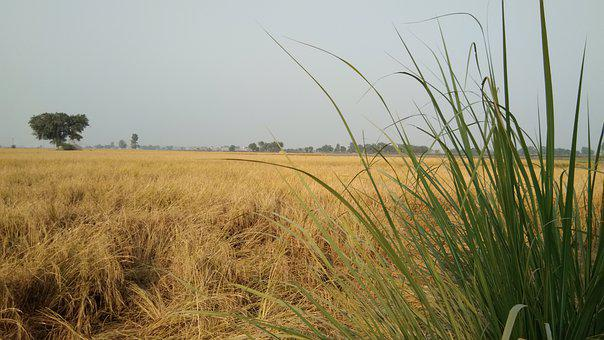 Crop, Field, Farm, Grass, Plants, Cropland, Farmland