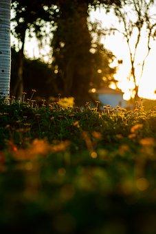 Daffodil, Flower, Blossom, Spring, Garden, Nature