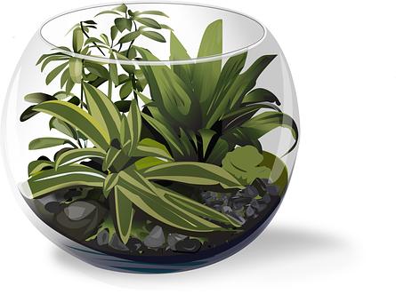 Plant, Terrarium, Succulent, Nature, Green, Desk Plant