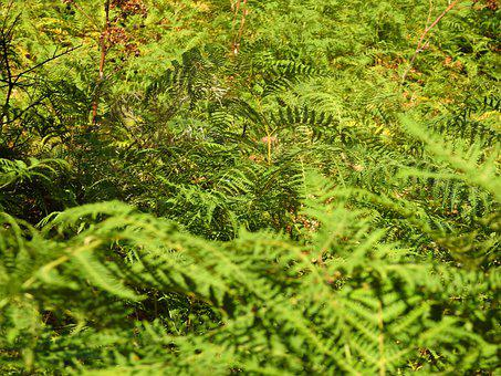 Leaves, Green, Foliage, Fern, Plants, Fern Leaves