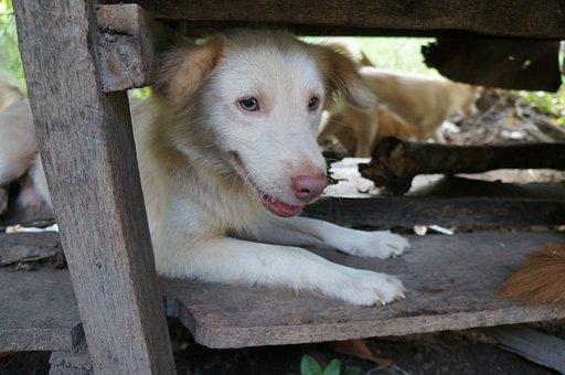 Dog, Pet, Cute, Animal, Face, Autumn, Friend