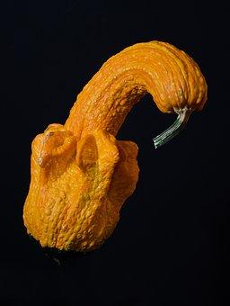 Gourd, Pumpkin, Squash, Fall, Harvest