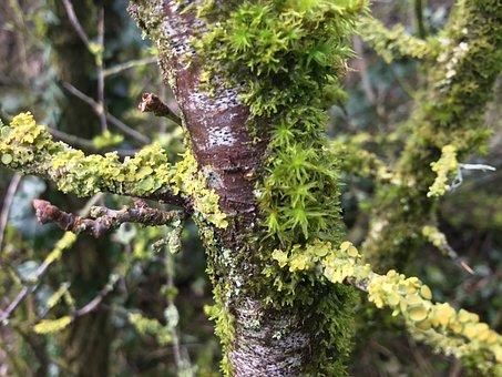 Lichen, Lichens, Biodiversity, Flora, Moss, Green