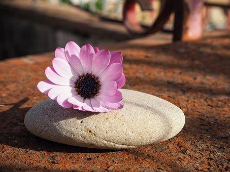 Flower, Daisy, Spring, Nature, Veins, Ancient, Petals