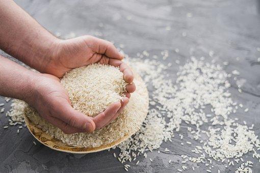 Field, Paddy, Rice
