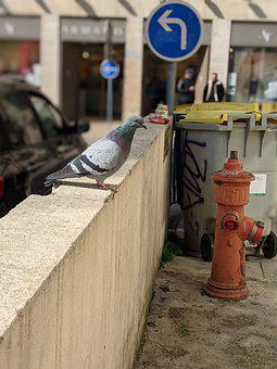 Bird, Pigeon, Urban, Panel, Tags, Pollution