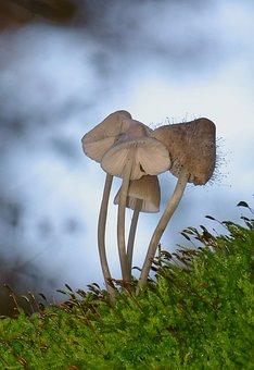 Mushrooms, Forest, Nature, Autumn, Moss, Spore