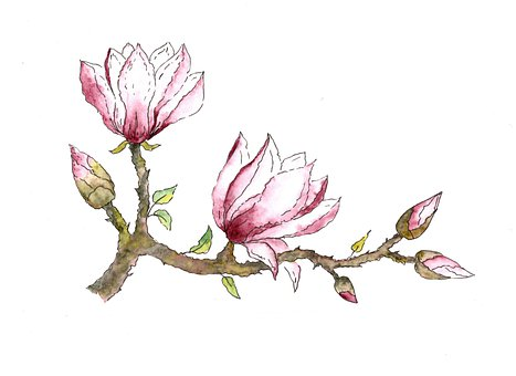 Watercolor, Magnolia, Bloom, Spring, Flower, Art