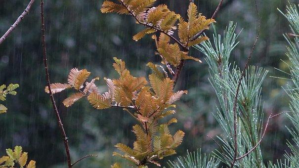 Rain, Rainy, Wet, Rainy Day, Raindrop, Weather, Sad
