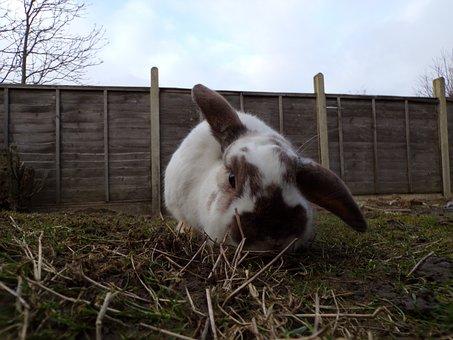 White Rabbit, White Rabbit With Black Ears