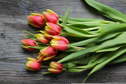Tulips, Flowers, Bunch, Bloom, Blossom, Plant