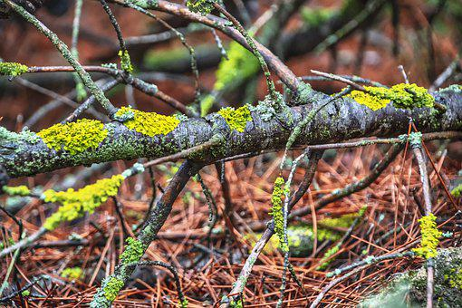 Tree, Branches, Lichen, Trunk, Wood, Forest, Nature