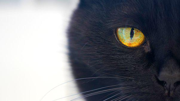 Cat, Kitty, Black, Black Cat, Eye, Cats Eye, Muzzle
