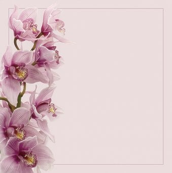 Background, Flowers, Orchids, Pink, Floral, Spring