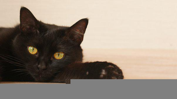 Cat, Kitty, Black, Black Cat, Eye, Muzzle, Whiskers
