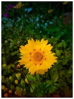 Macro Shot, Focused Shot, Yellow Flowers