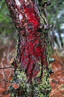 Tree, Trunk, Lichen, Bark, Wood, Forest, Nature