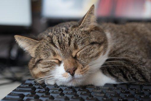 Cat, Sleep, Keyboard, Home Office, Asleep, Sleeping