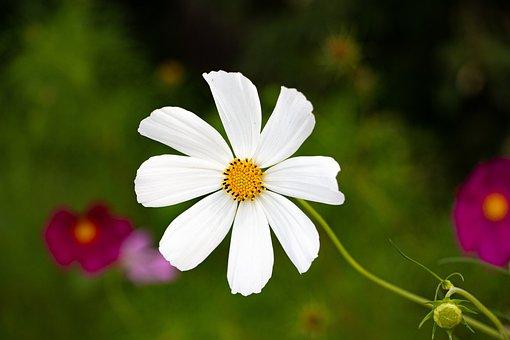 Little Flower, White, Elegant