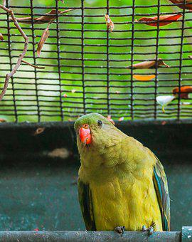 Parrot, Bird, Zoo, Perched, Animal, Wildlife, Beak