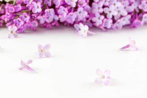 Flowers, Petals, Bouquet, Bloom, Blossom, Branch