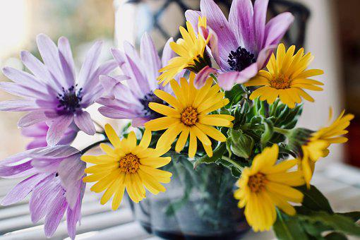 Flowers, Daisies, Vase, Bunch, Bouquet Of Flowers